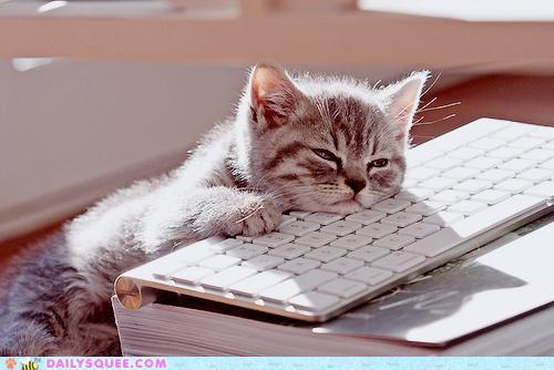 chat-fatigue-ordi