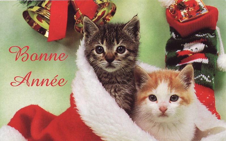 Ça faisait longtemps que je n'avais pas mis de petits chats mignons :)