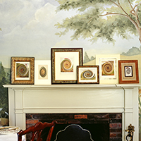 Frames of rooster placed above the fireplace