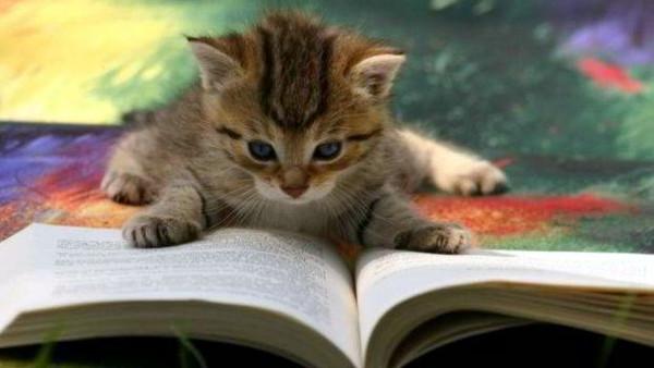 petit chat mignon livre