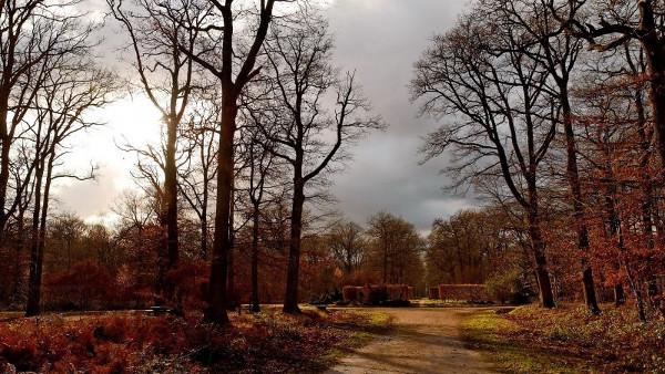 rayon de lumière forêt