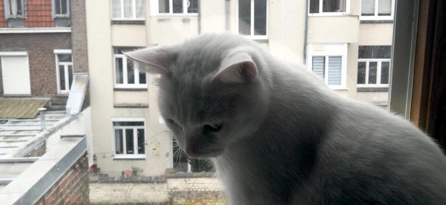 Nuage le chat