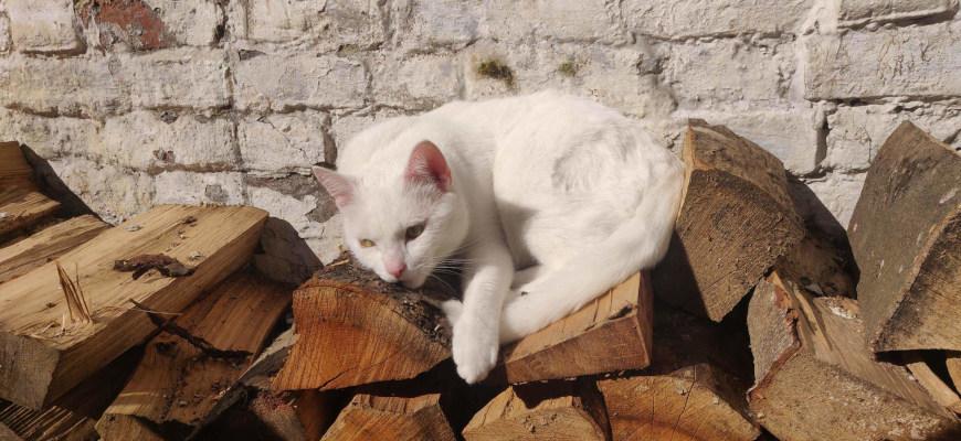 chat au soleil